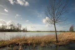 Zalewający pola zdjęcie royalty free
