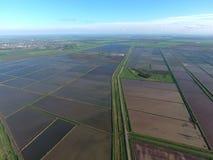 Zalewający ryżowi irlandczycy Agronomic metody rosnąć ryż w polach fotografia royalty free
