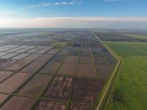 Zalewający ryżowi irlandczycy Agronomic metody rosnąć ryż w polach obrazy royalty free