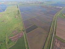Zalewający ryżowi irlandczycy Agronomic metody rosnąć ryż w polach obraz royalty free