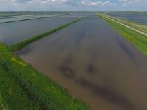 Zalewający ryżowi irlandczycy Agronomic metody rosnąć ryż w polach zdjęcie stock
