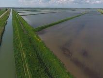 Zalewający ryżowi irlandczycy Agronomic metody rosnąć ryż w polach zdjęcia stock