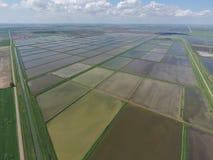 Zalewający ryżowi irlandczycy Agronomic metody rosnąć ryż w polach fotografia stock