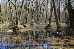 zalewająca lasowa wiosna Zdjęcia Stock
