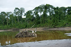 Zalewający tereny przy rzeki stroną Zdjęcia Royalty Free