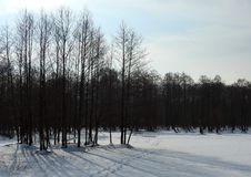 Trees with ice pieces after flood, Lithuania Royalty Free Stock Photo