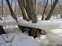 Zalgiriu skog i vinter efter floden, Litauen Arkivbilder