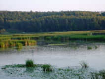 Zaliv Reka pluskwy Vinnytsia południowy region 2013year Obrazy Stock