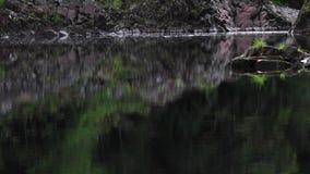 Zalm, forel, die langs de vreedzame kalme rivier springen findhorn, morayshire, Schotland stock footage