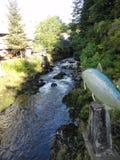 Zalm in Stroom tijdens Zalm die in Alaska in werking wordt gesteld Vissen die naar hun plaats van geboorte van zoutwater aan kuit royalty-vrije stock foto's