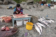 Zalm visseizoen in Chukotka stock afbeeldingen