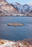 Zalmlandbouwbedrijf in Noorse fjord, de winterlandschap, Lofoten-Eilanden, Noorwegen royalty-vrije stock foto's
