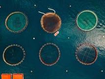 Zalmviskwekerij met drijvende kooien Lucht Mening Stock Afbeeldingen
