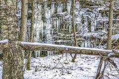 Zalodzona faleza i drzewa w zimie obrazy royalty free