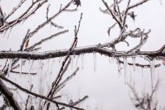 Zalodzone gałąź drzewne Obraz Stock