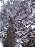 Zalodzone gałąź w zima lesie w górach W Carpathians w Ukraina fotografia stock