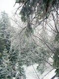 Zalodzone gałąź w zima lesie w górach W Carpathians w Ukraina obraz royalty free