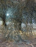 Zalodzony drzewo w nocy miasta parku. Fotografia Stock