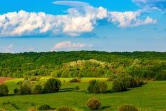 zam maravilhoso Ucr?nia, campos o sol brilhante da floresta fotografia de stock