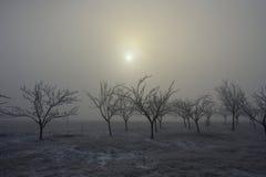 Zamarznięci drzewa 01 i mgła Obrazy Royalty Free