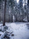 Zamarznięci drzewa w zimie Polska Obrazy Royalty Free