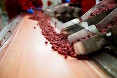Zamarznięci karmowi fabryczni wnętrza obrazy stock