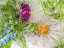 Zamarznięci kwiaty i liście Zdjęcie Royalty Free