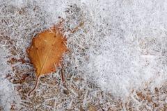 Zamarznięci lodowi kryształy z spadać suchym jesień liściem na ziemi zdjęcia stock