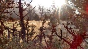 Zamarznięci rosa kropel góry paśniki Zdjęcie Royalty Free