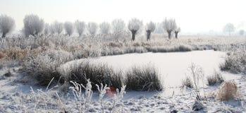 Zamarznięci stawowi i biali drzewa w śniegu krajobrazie fotografia royalty free