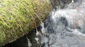 Zamarznięci wodni lodowi kryształy zdjęcie royalty free