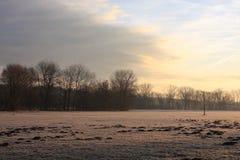 zamarznięta łąka Fotografia Royalty Free