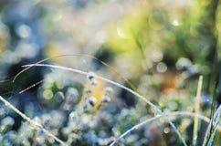 Zamarznięta łąkowa roślina Fotografia Royalty Free