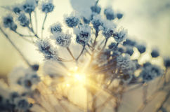 Zamarznięta łąkowa roślina Obrazy Royalty Free