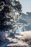 Zamarznięta ścieżka zaświecająca ranku słońcem Obraz Stock