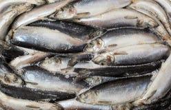 Zamarznięta ścierwo ryba w cegle dla handlu i tła Obraz Stock