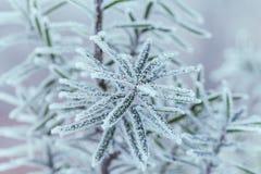 zamarznięta drzewna zima Makro- strzał Fotografia Stock