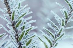 zamarznięta drzewna zima Makro- strzał Obrazy Royalty Free