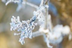 Zamarznięta gałąź drzewo zakrywający z hoarfrost ostrości pojęciem Zdjęcia Royalty Free