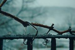 Zamarznięta gałąź na ciężkiej zimie Fotografia Stock