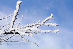 Zamarznięta jabłoni gałąź w zimie Zdjęcia Royalty Free