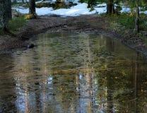 Zamarznięta kałuża na lasowej drodze zdjęcia stock