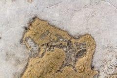 Zamarznięta kałuża w wczesnej wiośnie na pogodnym ranku obraz stock