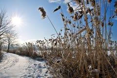 zamarznięta krajobrazowa zima zdjęcie royalty free