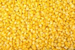 Zamarznięta kukurudza jako tło Jarzynowa konserwacja zdjęcie stock