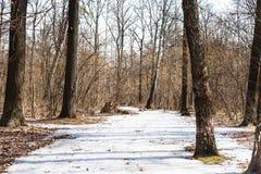 Zamarznięta lodowa ścieżka w wiosna lesie Zdjęcia Royalty Free