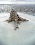 zamarznięta lodowa melt karpy woda zdjęcie royalty free