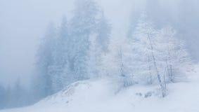 Zamarznięta mgła Obraz Stock
