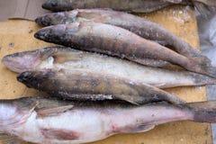 Zamarznięta rybia szczupak żerdź t zdjęcie royalty free