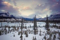Zamarznięta rzeczna dolina z małym drzewa coverd wokoło śniegiem i wysokie góry pod dramatycznym chmurnym niebem, Banff, park nar Zdjęcia Royalty Free